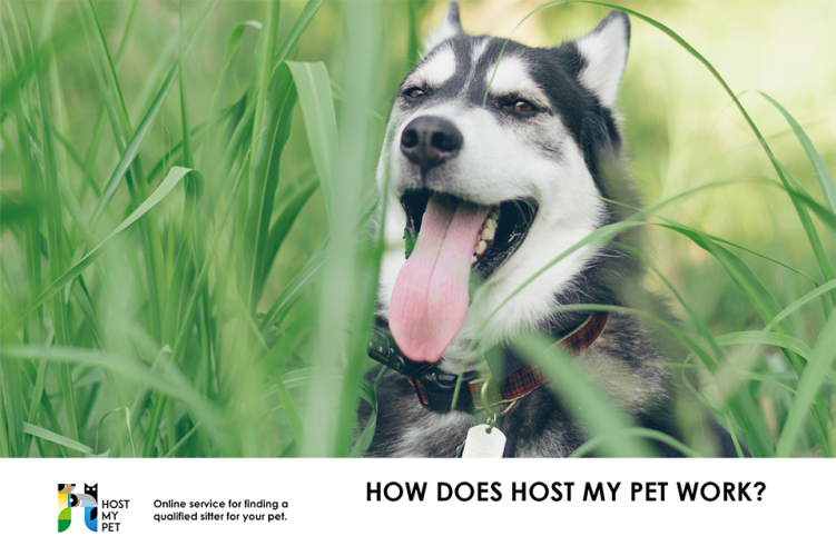 How does Host My Pet work?