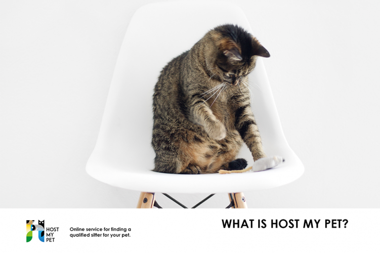 What is Host My Pet?