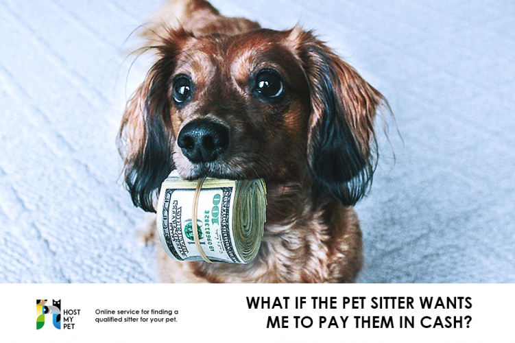 What if the pet sitter wants me to pay them in cash?